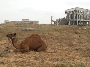 Gaza airport, a grazing ground for camels. Photo: ©Khaled Diab